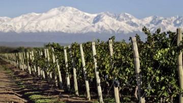 Egresado desarrolló proyecto sobre sustentabilidad de la vitivinicultura